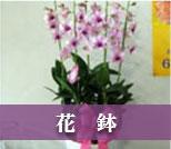 お供え用の花鉢