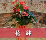 お祝い用の花鉢