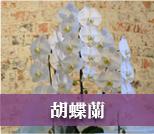 お供え用の胡蝶蘭