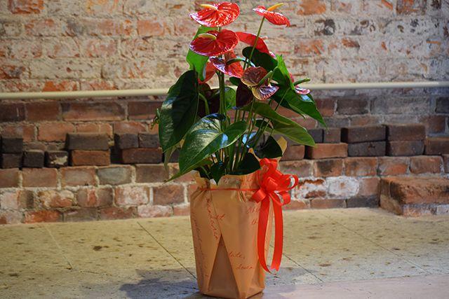 お祝い花鉢-1の写真3