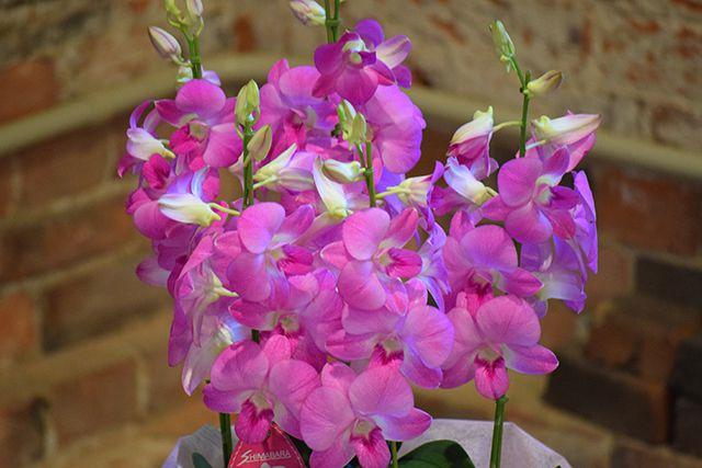 お祝い花鉢-2の写真2