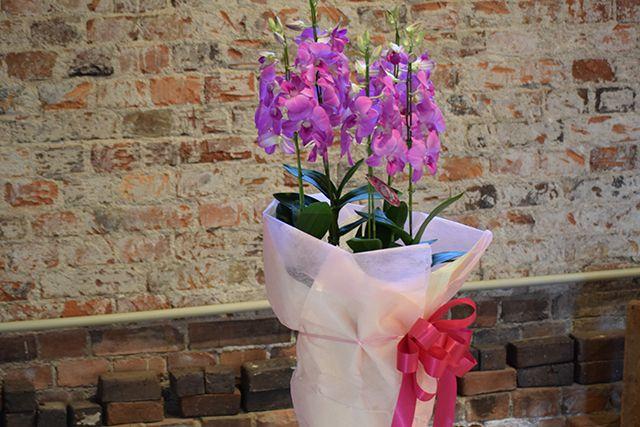 お祝い花鉢-2の写真3