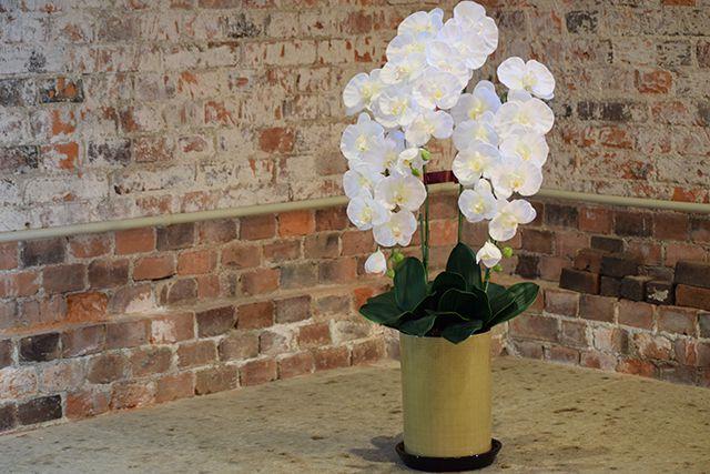 花の拡大写真