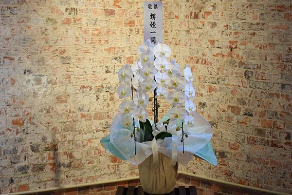 お供え胡蝶蘭-1の写真2
